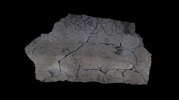 Camelids footprint 3D Model