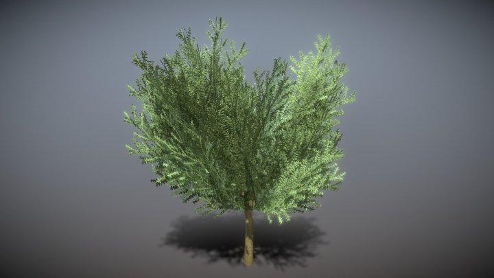 Boxwood Tree Version 8 3D Model