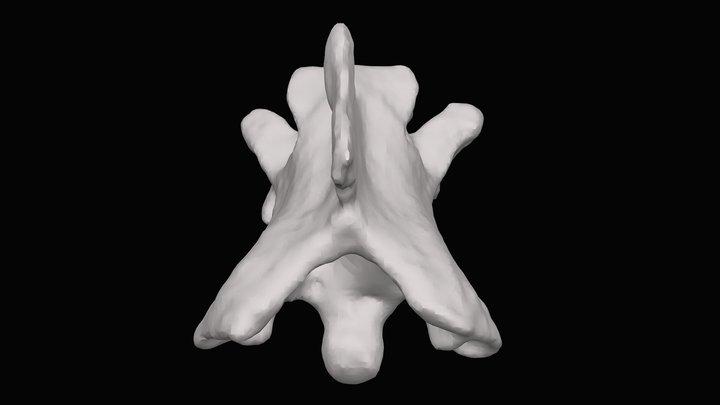 Snake vertebra. Gray Fossil Site, early Pliocene 3D Model