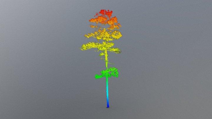 Wade Tree 18 Height Gradient 3D Model