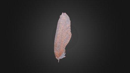 Hummingbird Feather 3D Model