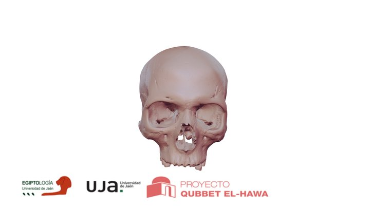 Cráneo de la dama Gaut-Anuqet 3D Model