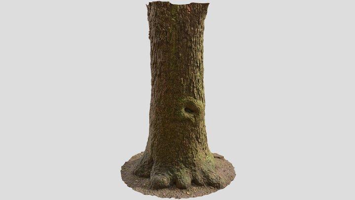Free Tree Bark Scan   Retopologized 3D Model