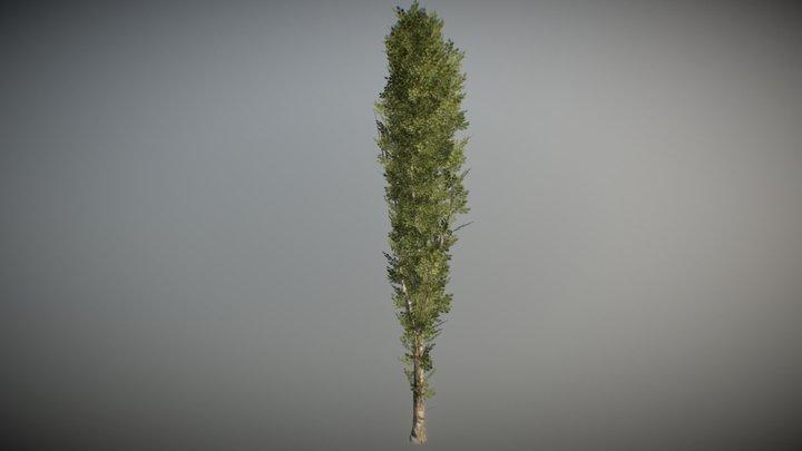 POPLAR TREE - HIGHT TEXTURE LOW-POLY MODEL 3D Model