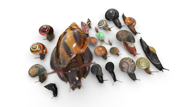 A collection of snails from around the world 3D Model