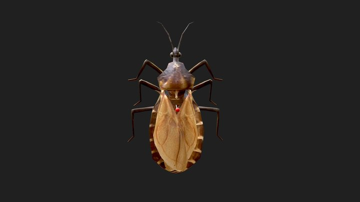 Triatoma infestans 3D Model