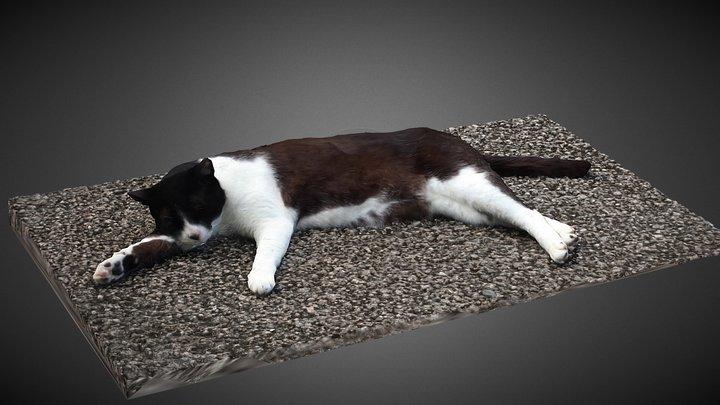 Cat(Nana) 3D Model