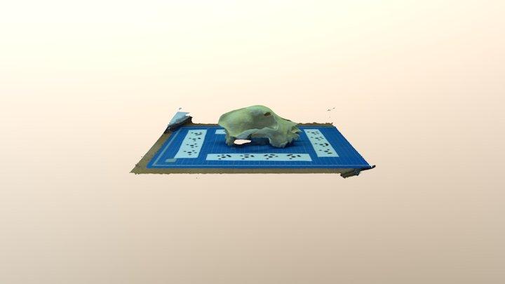TestChien 3D Model