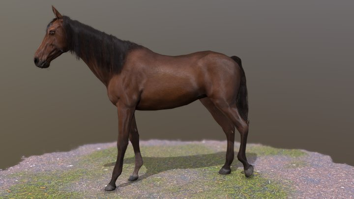 Horse standing Pose 2 3D Model