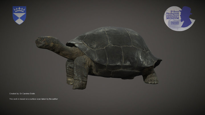 Galapagos Giant Tortoise 3D Model