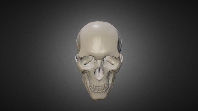 Anatomy Studies - Skull 3D Model