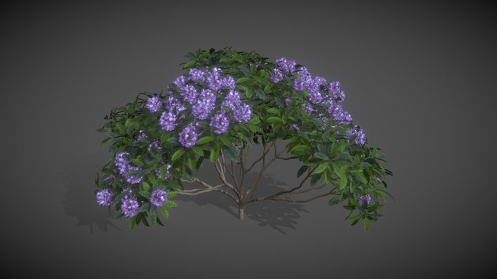 AS17 Rhododendron Ponticum (Common Rhododendron) 3D Model