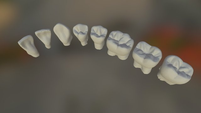 Lower Adult Tooth Morphology Test 3D Model