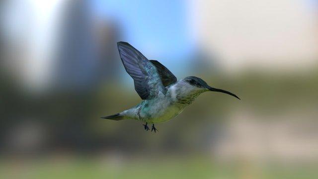 Hummingbird 3D Model