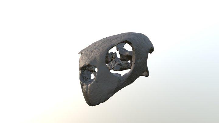 Carolinachelys wilsoni CCNHM 300 skull 3D Model