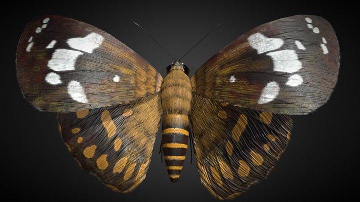 Celaenorrhinus Taiwanus Rigged 3D Model