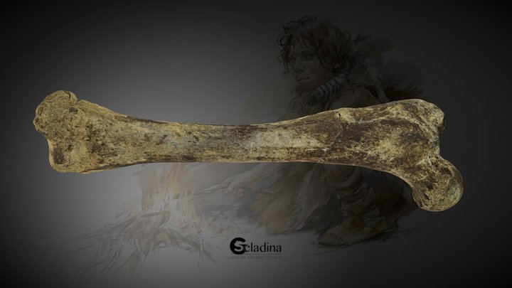 Cave Bear Femur 3D Model
