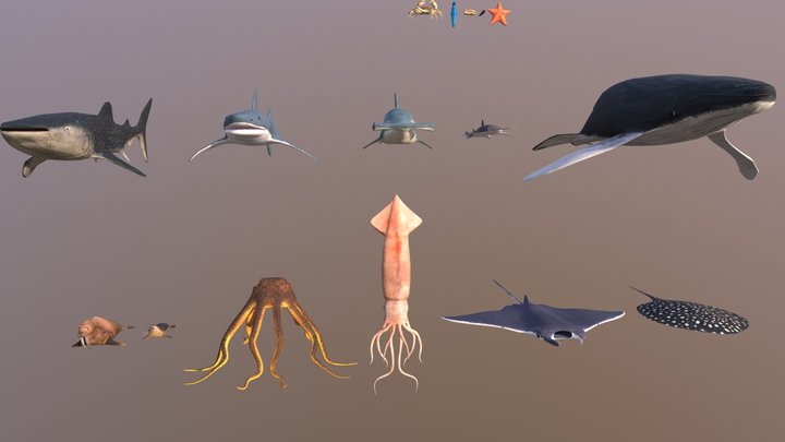 16 Marine Animals Pack - Low Poly Collection 3D Model