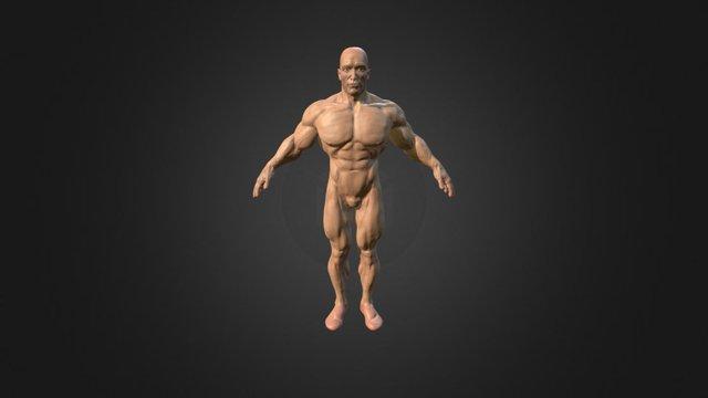 Arnold Schwarzenegger T Pose 3D Model