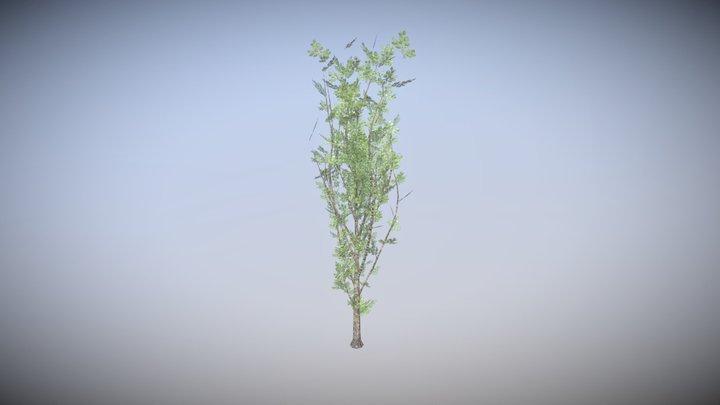 POPLAR TREE 1 - HIGHT TEXTURE LOW-POLY MODEL 3D Model