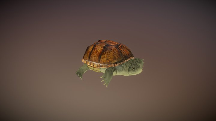 Staurotypus-salvini-2013fb24 3D Model