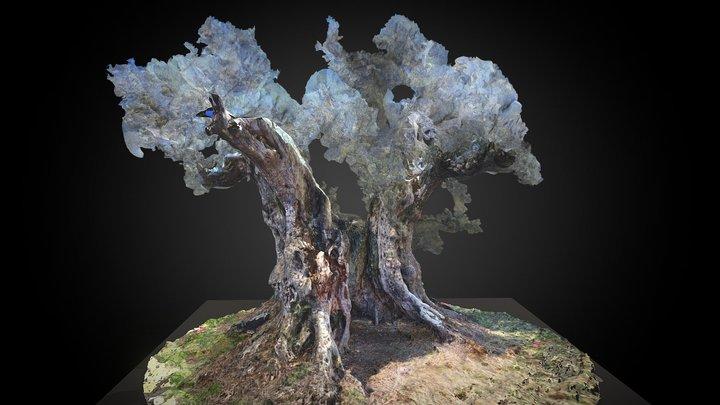 Olivo - Ráfales 3D Model