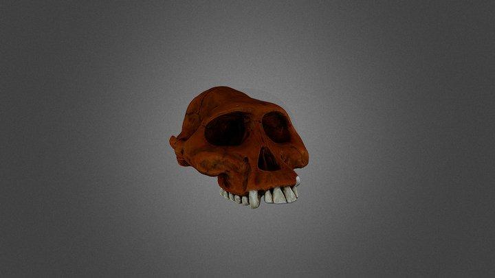 Australopithecus afarensis 3D Model