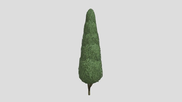 Boxwood Tree Version 9 3D Model
