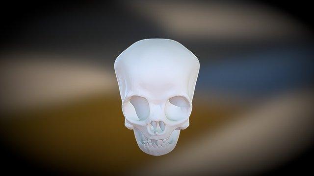 Head Skull3 3D Model