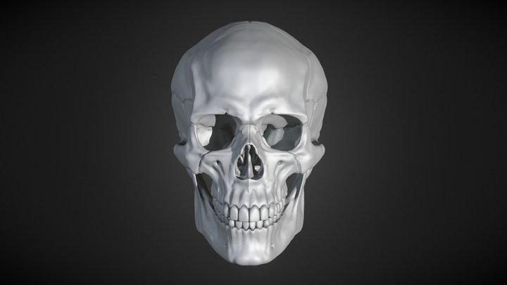 Human Male Skull 3D Model