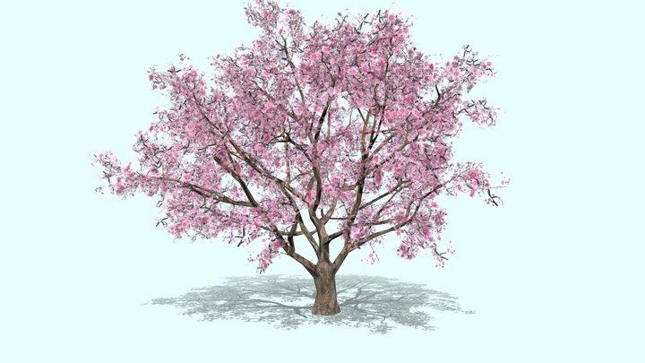 Sakura Tree Blossom cherry 3D Model