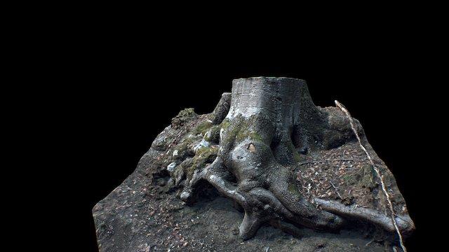 Scanned Tree Trunk 3D Model