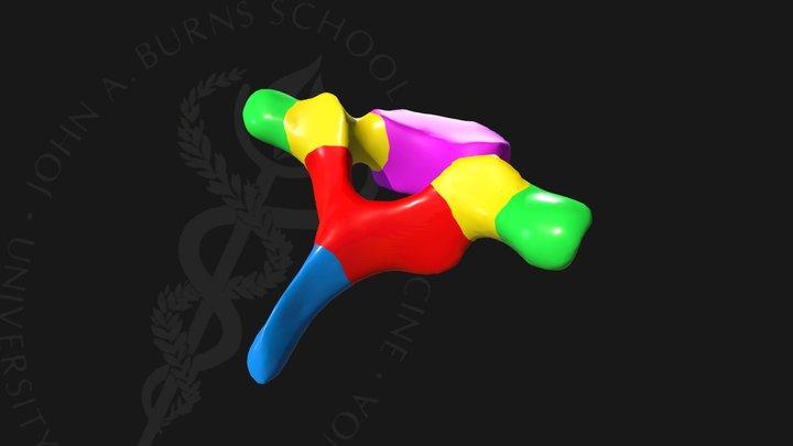 Vertebra 3D Model