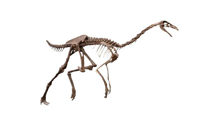 ไดโนเสาร์4 3D Model