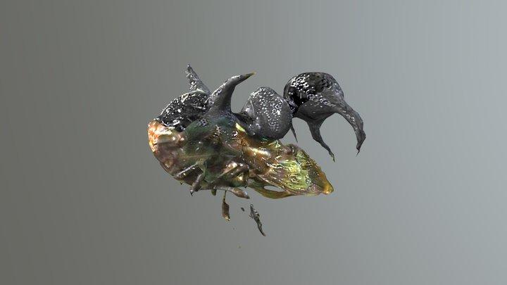[REAL SPECIMEN] Tree Hopper 3D Model
