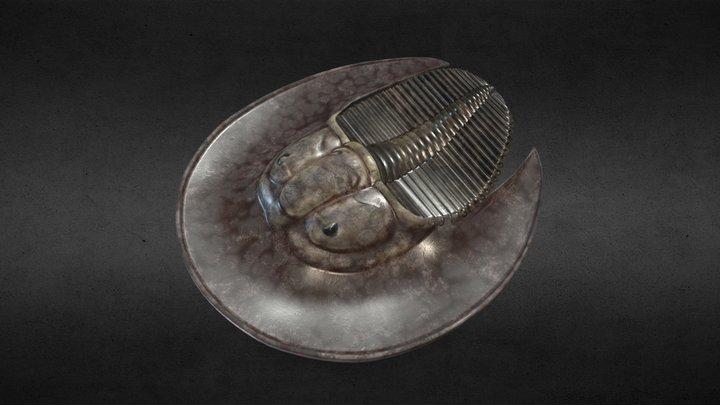 trilobite Bohemoharpes naumanni 3D Model
