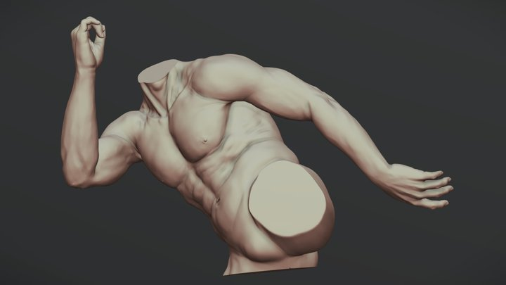 Torso With Arms 4 3D Model