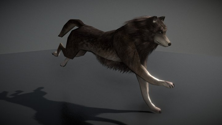 Wolf with Animations 3D Model
