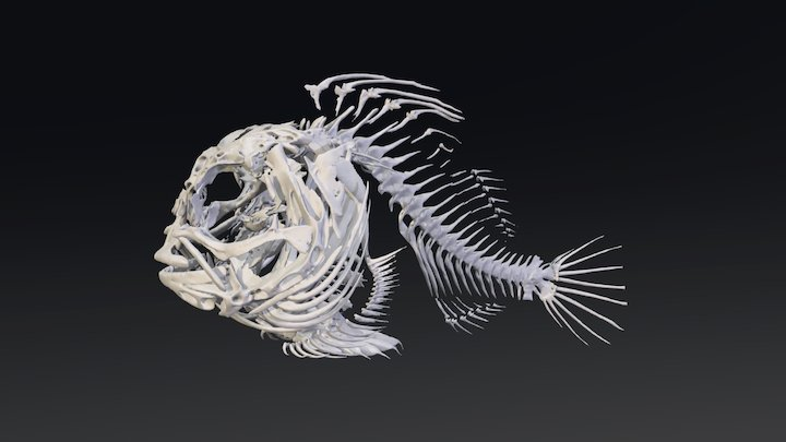 Lethotremus awae_Bone 3D Model