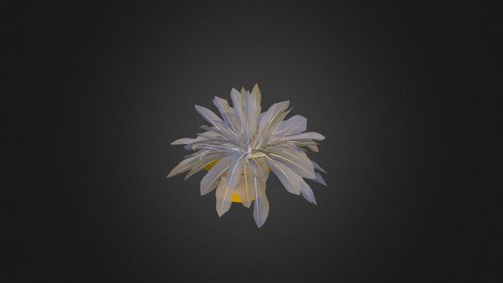 Blomma 3D Model