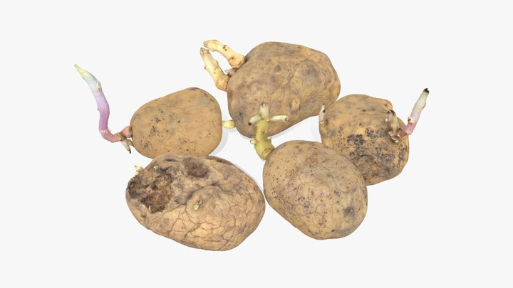 Old Potatoes with Sprouts 3D Model