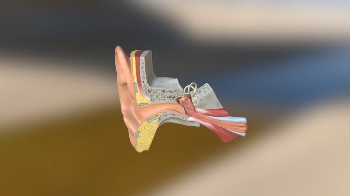EarDelicious 3D Model