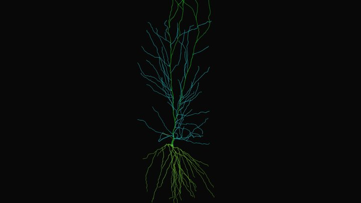 Hippocampus CA1 Pyramidal Cell 3D Model