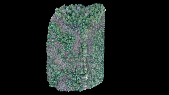 Working Forest 3D Model