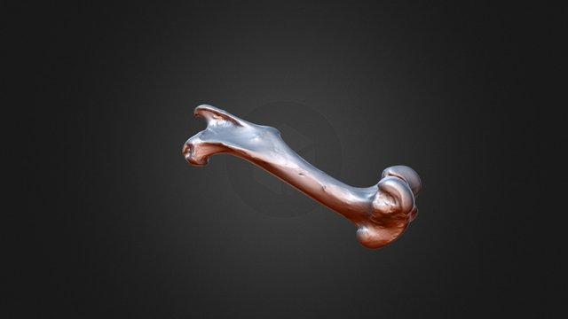 Femore 3D Model