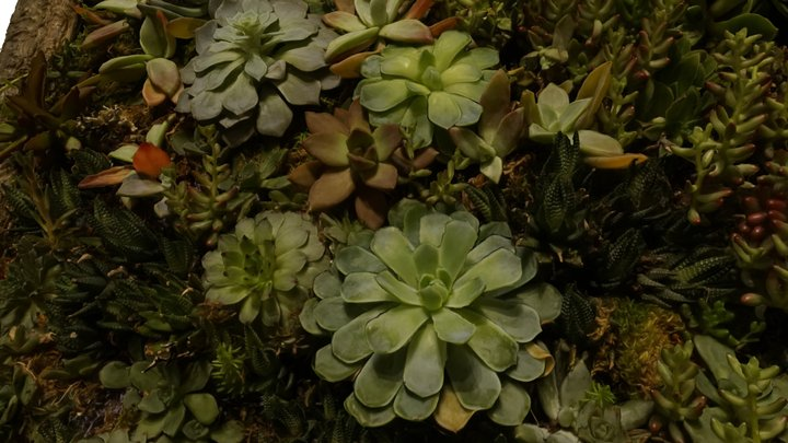 #9 - Succulent Hanging Garden, Valencia St, SF 3D Model