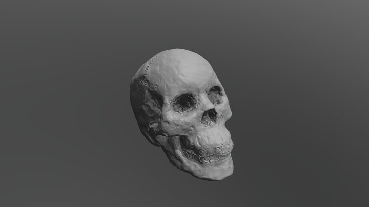 Skull by Katharine Kuharic 3D Model