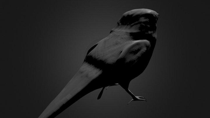 Mocking Bird 3D Model