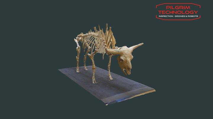 squelette de bison 3D Model