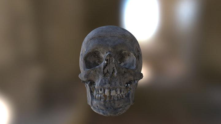 Modern Human Skull 3D Model